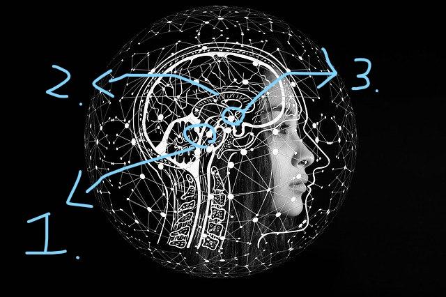 腦部側面圖